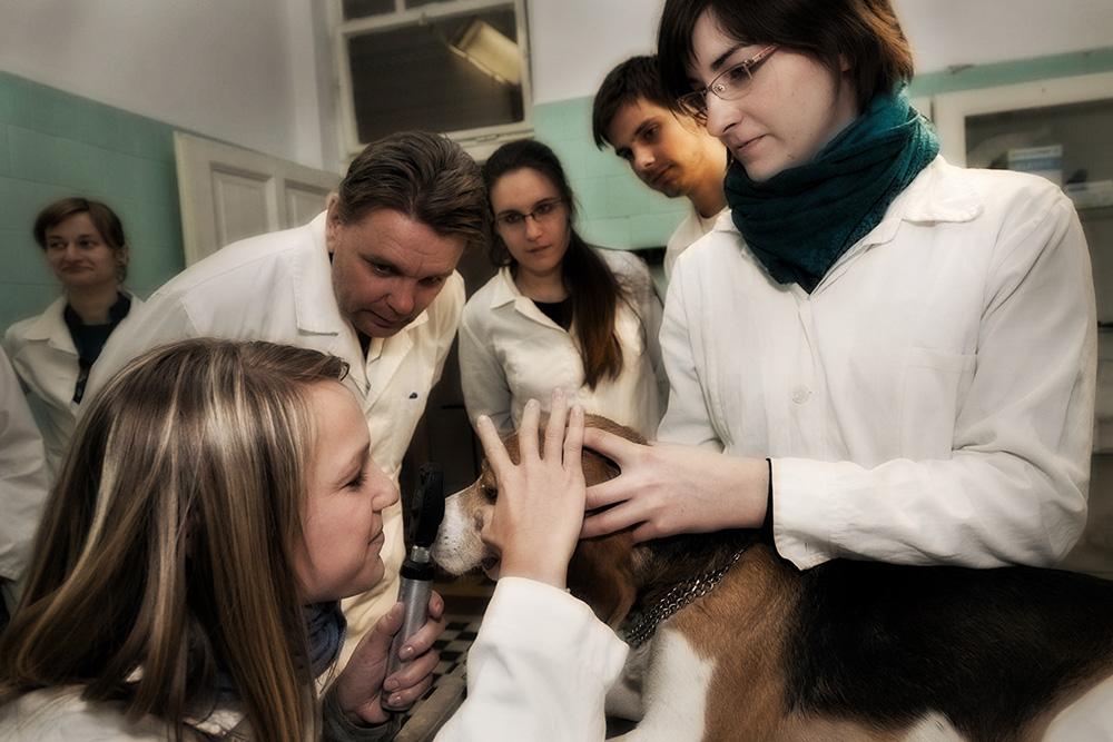 Hallgatói szemészet gyakorlat, Dr. Szentgáli Zsolt vezetésével.