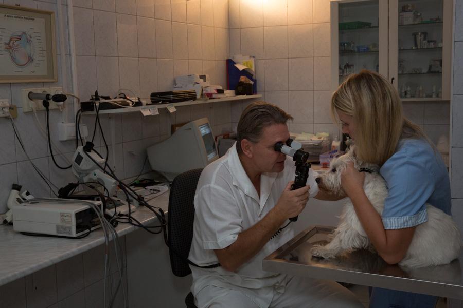 Szemészeti szakrendelő. A réslámpás vizsgálat, a szemészeti vizsgálat alapja.