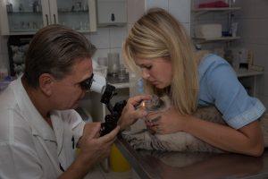 Réslámpa biomikroszkpia macskán